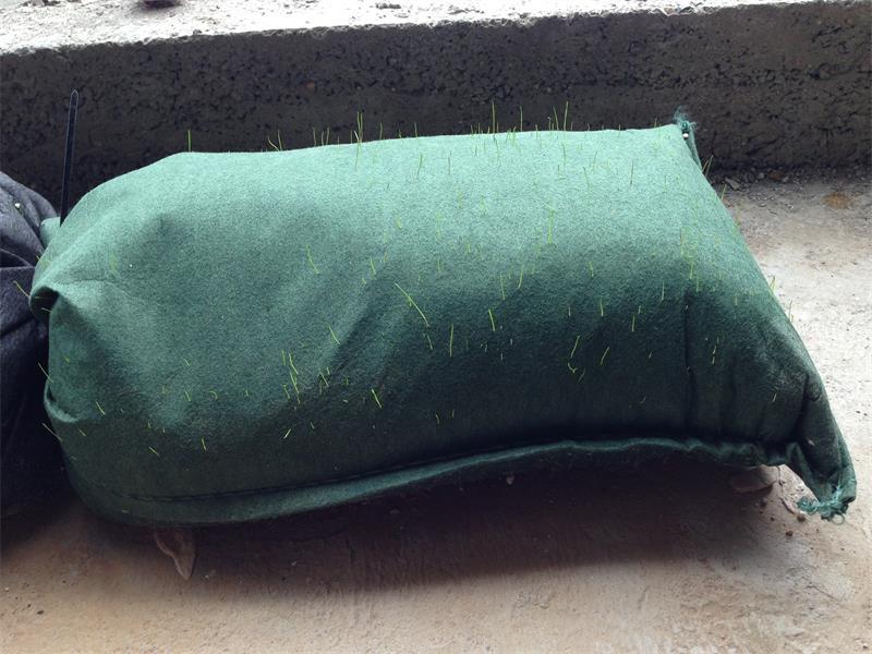 生态袋装土长草效果图